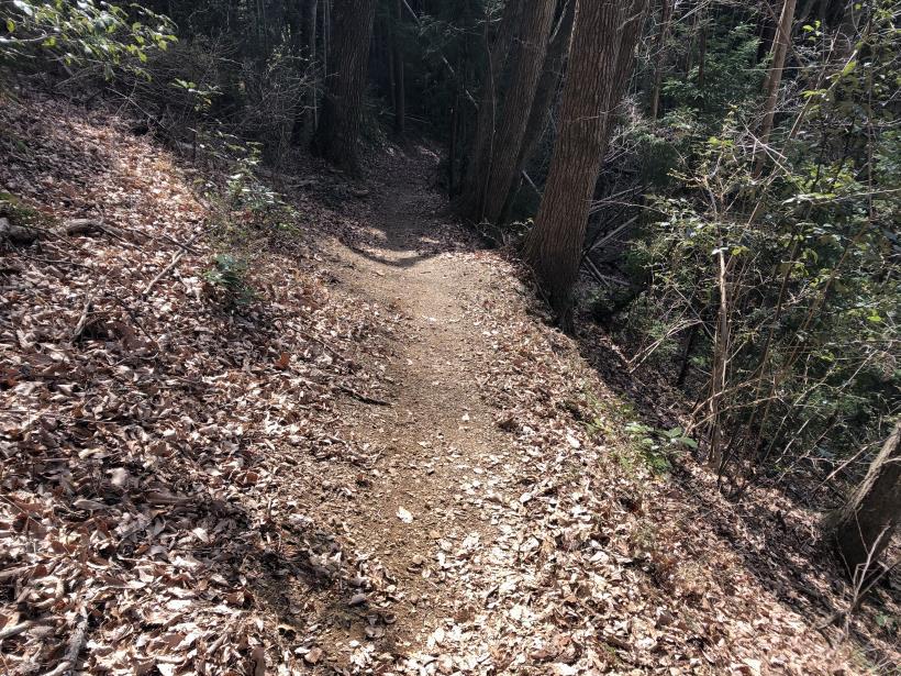 八重山(上野原)150