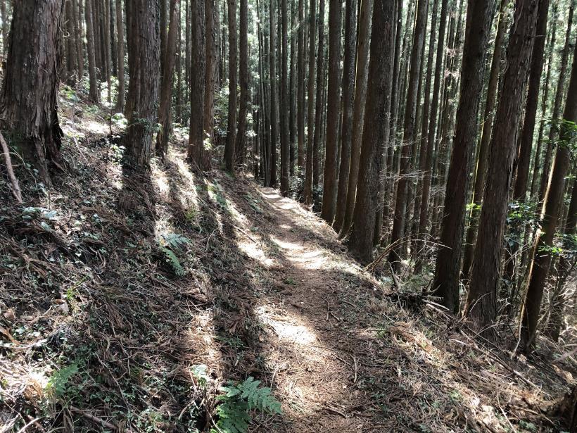 八重山(上野原)152