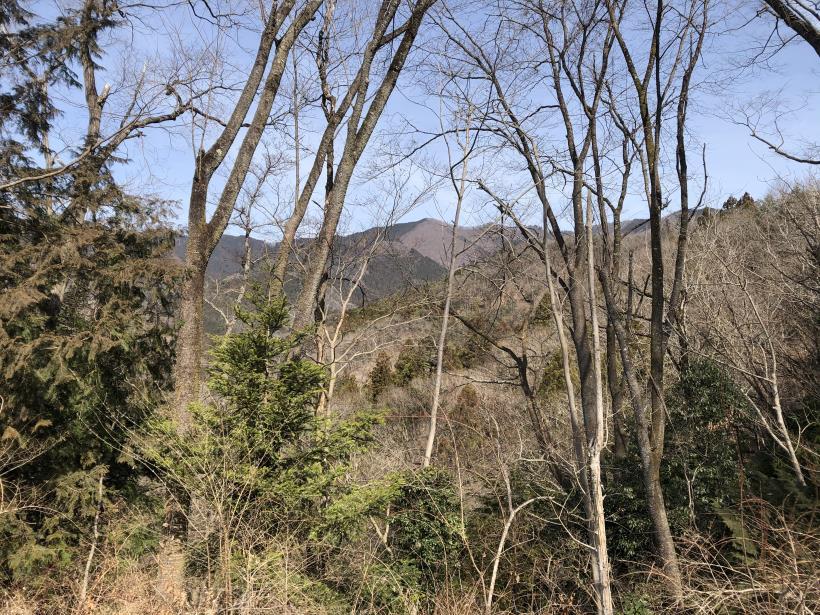 八重山(上野原)161