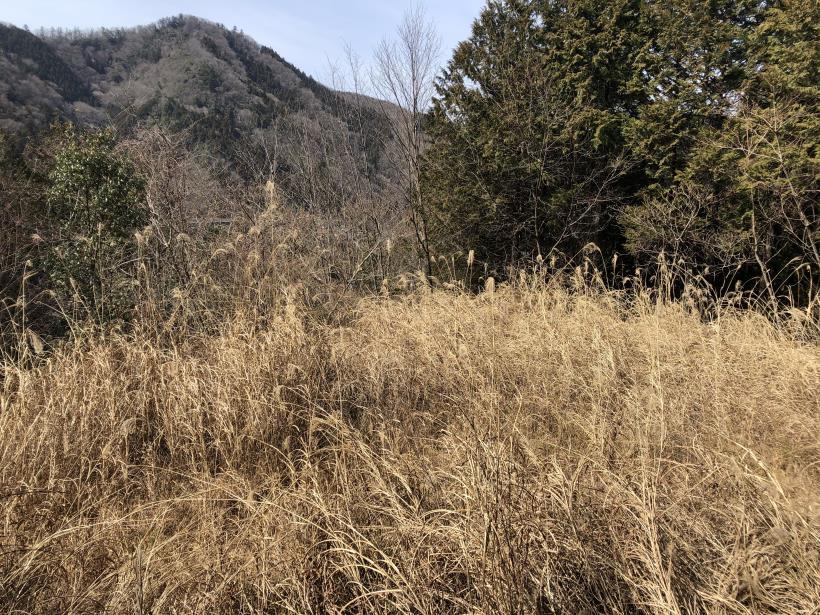八重山(上野原)168