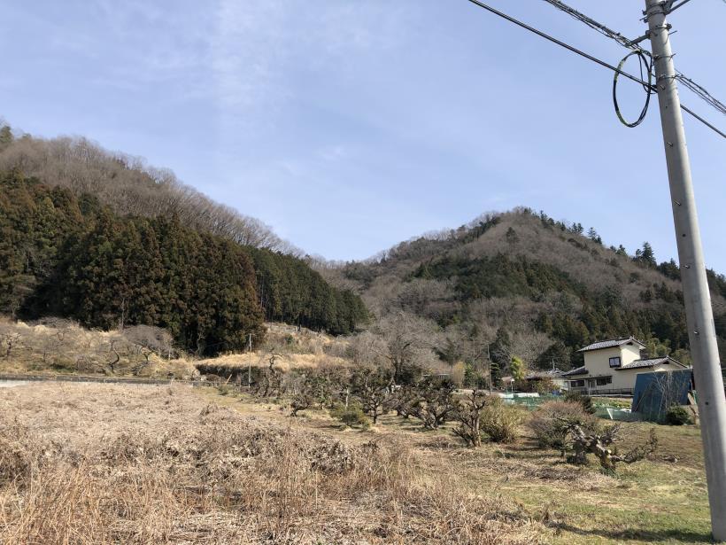 八重山(上野原)178