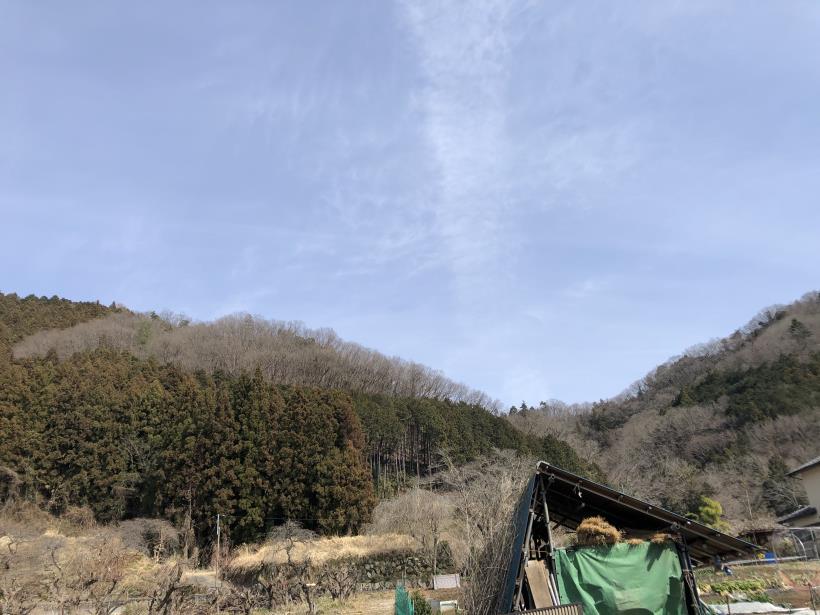 八重山(上野原)179