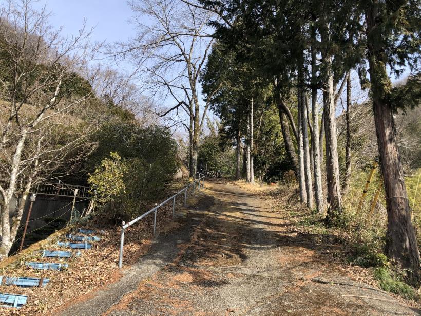 八重山(上野原)180
