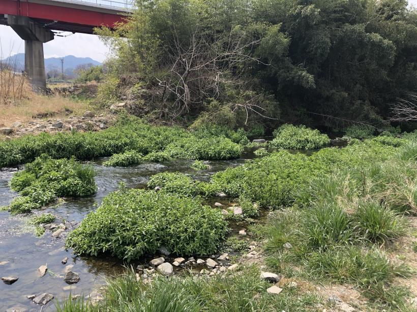 北浅川のかなりいい場所20