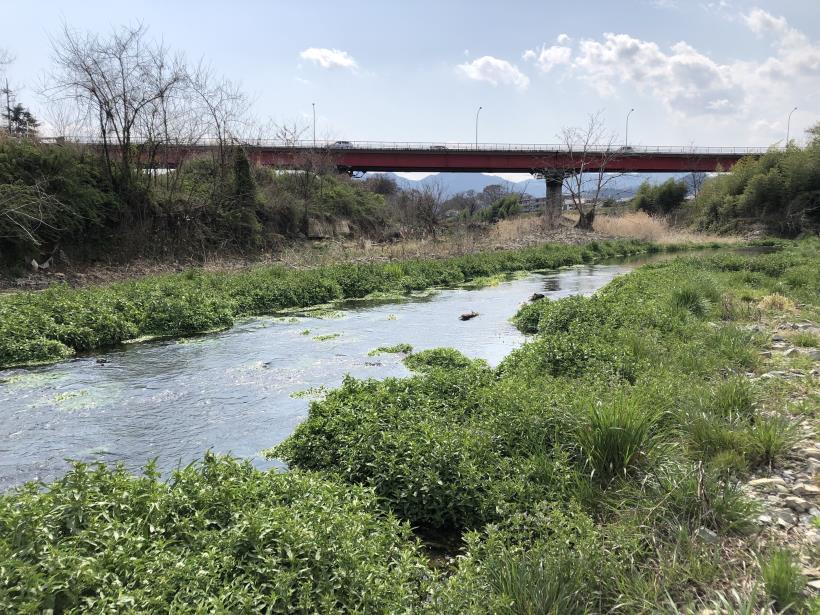 北浅川のかなりいい場所33