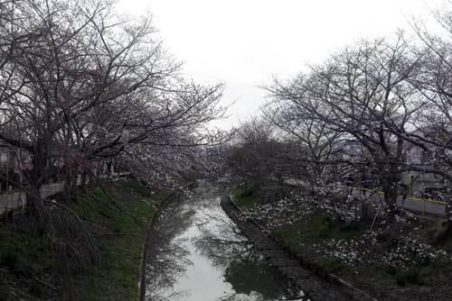 200326佐保川