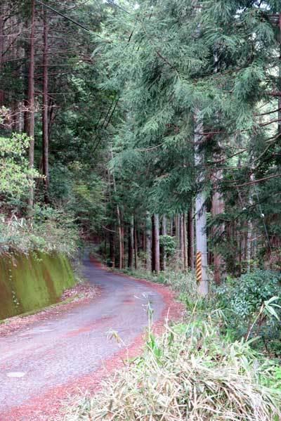200421舗装道路