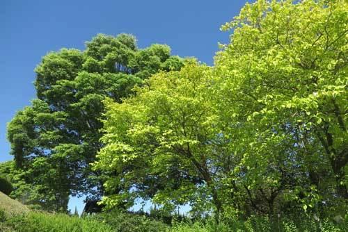 200507益田池堤の緑