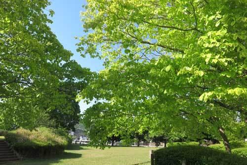 200511益田池堤公園