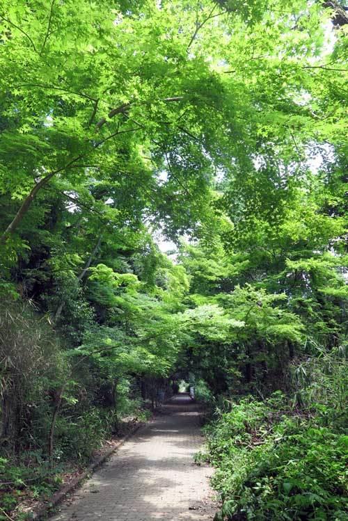200521緑のトンネル