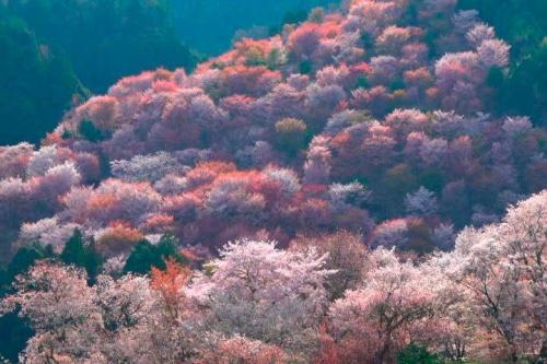 200616吉野山朝日
