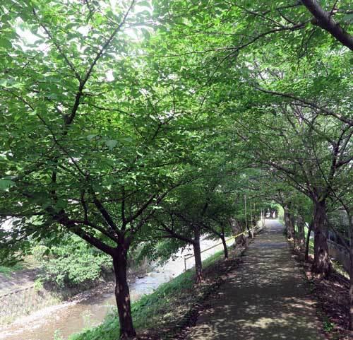 2007001佐保川2