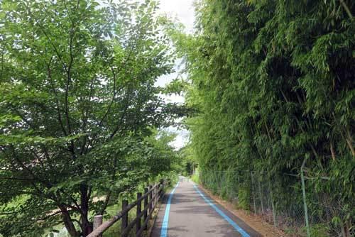 200716秋篠川沿い