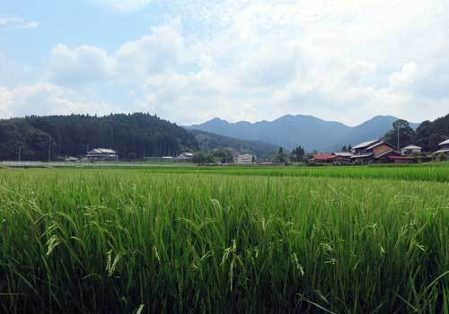 200803稲