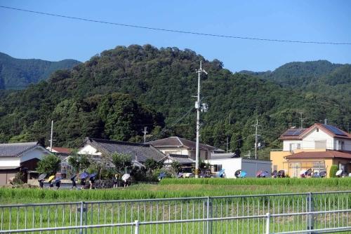 200826傘の列3