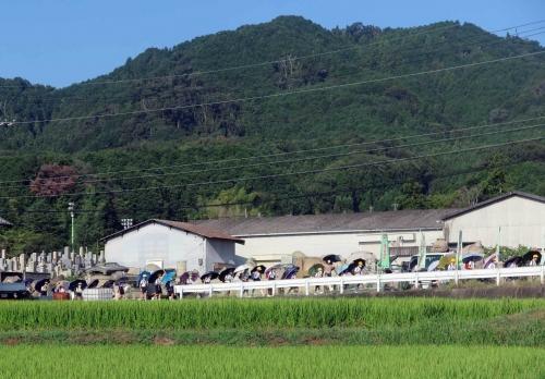 200826傘の列4