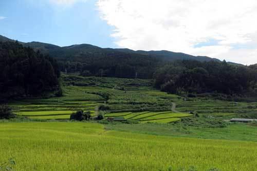 200920田園