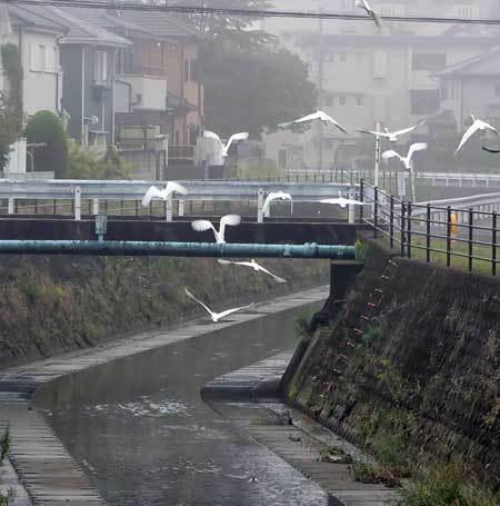201020菰川3