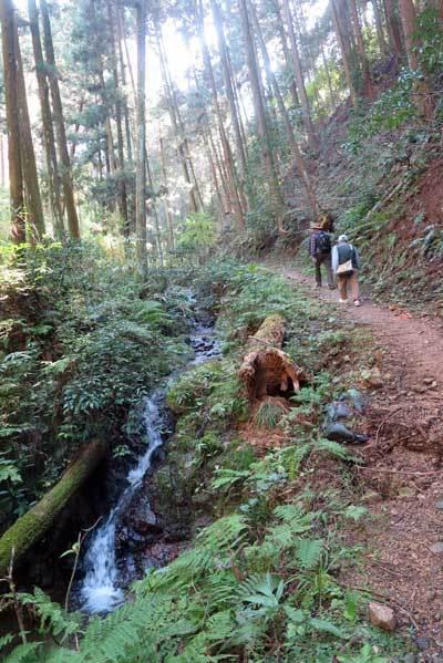 201115渓流沿い