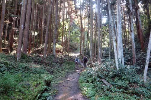 201115山道5