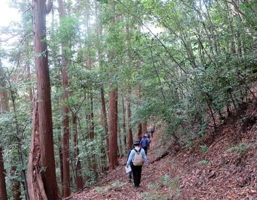 201122五百羅漢へ