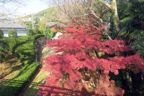 201205公園紅葉