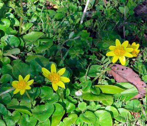 2102黄色い花