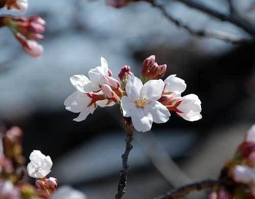 210318開花