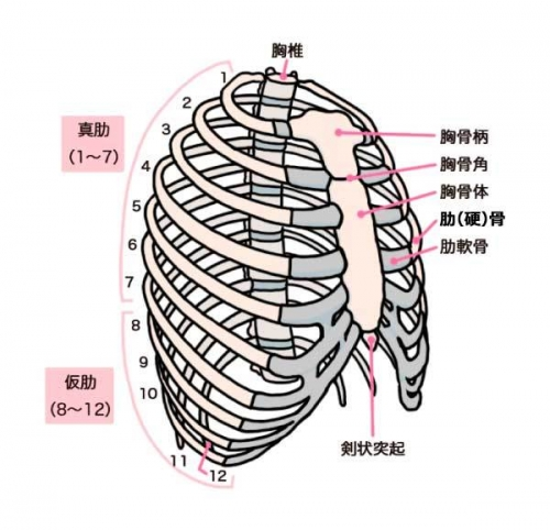 202103肋骨図