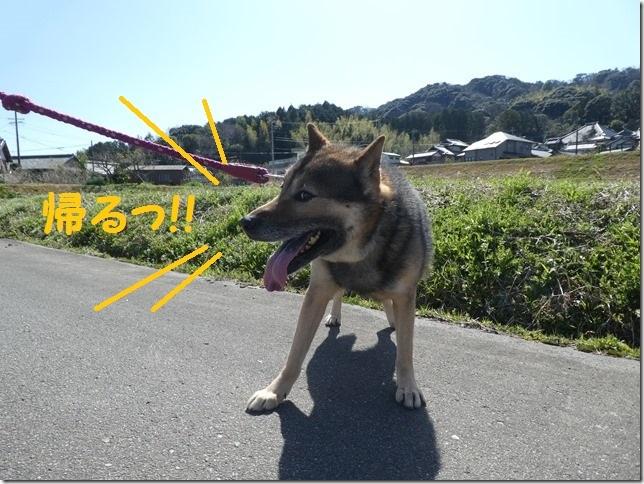 20200312あおぞら春散歩-14