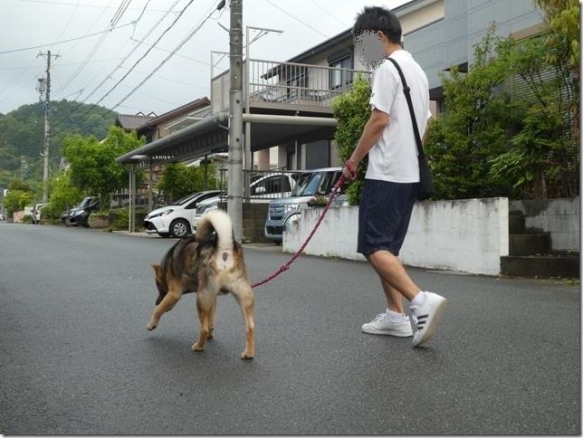 20200523早朝の朝散歩カムイ編-05