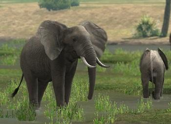 afrika-elephant.jpg