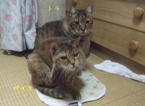 toratobike46.jpg