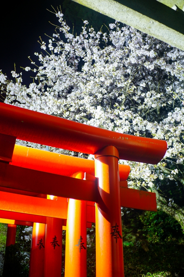 210401 tane shrine 04