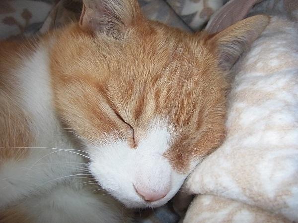 2012 眠る三平