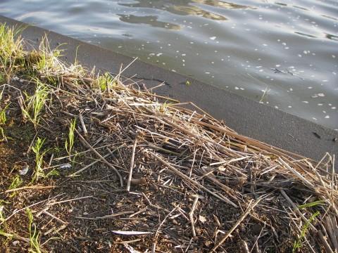 増水濁りゴミ