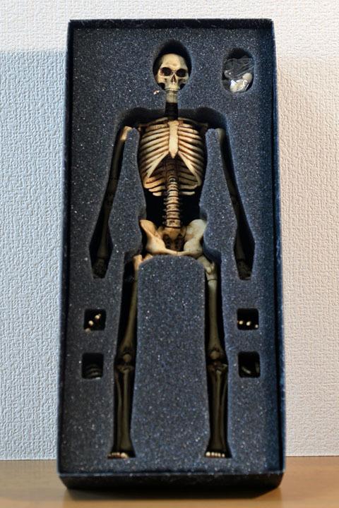 Human Skeleton Body 20 0003