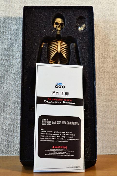Human Skeleton Body 20 0004
