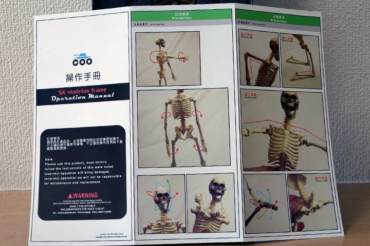 Human Skeleton Body 20 0006