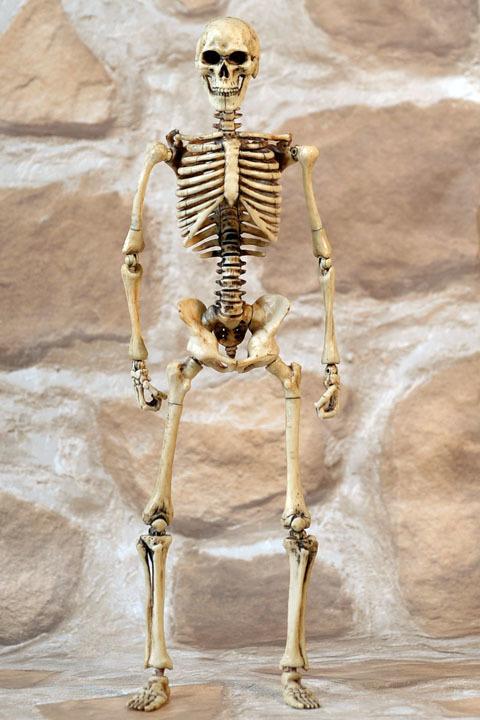 Human Skeleton Body 20 0007