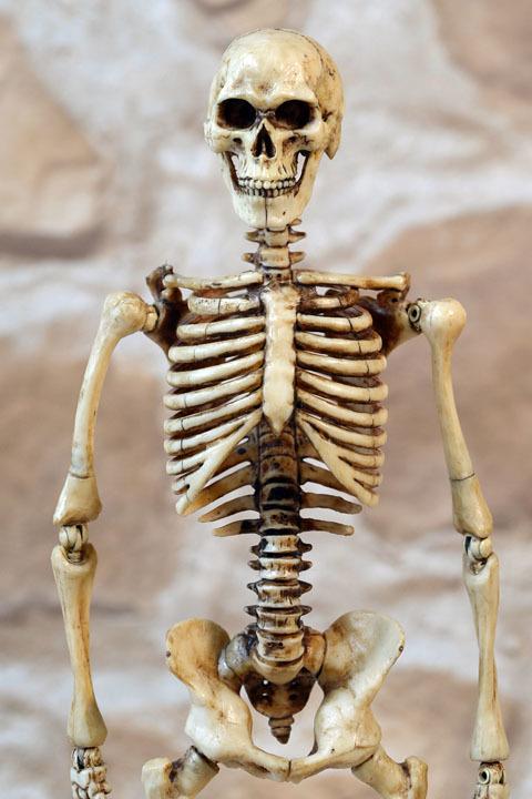 Human Skeleton Body 20 0008