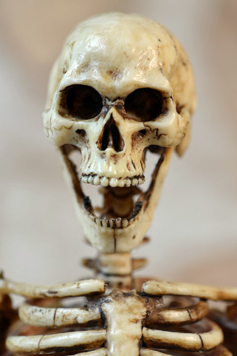 Human Skeleton Body 20 0009