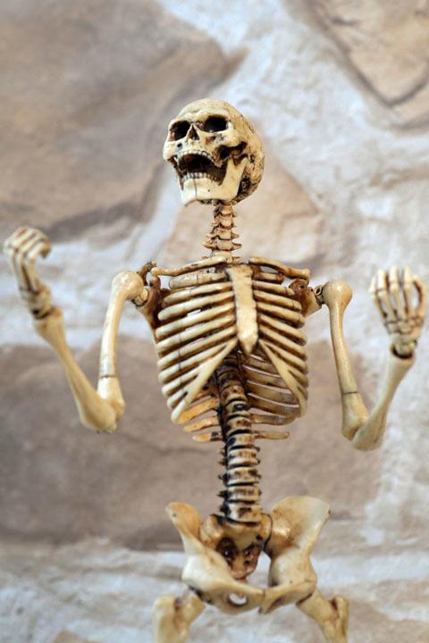 Human Skeleton Body 20 0010