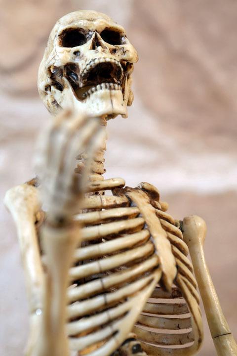 Human Skeleton Body 20 0011