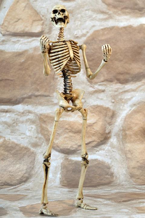 Human Skeleton Body 20 0012
