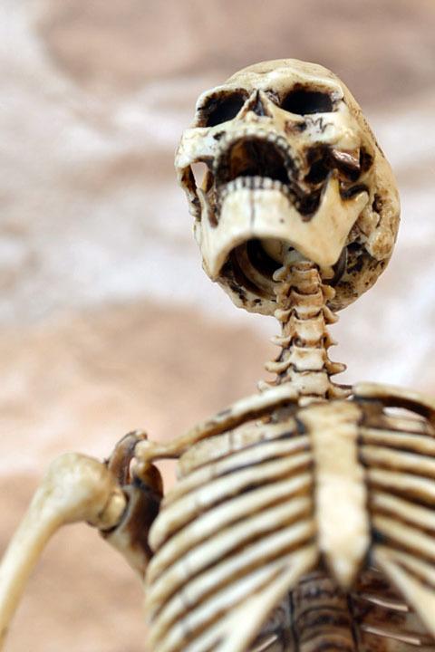 Human Skeleton Body 20 0013