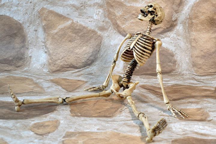 Human Skeleton Body 20 0014