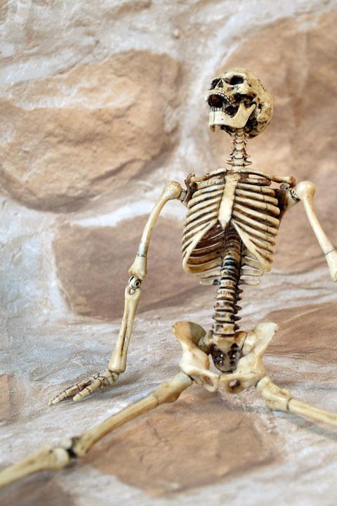 Human Skeleton Body 20 0015
