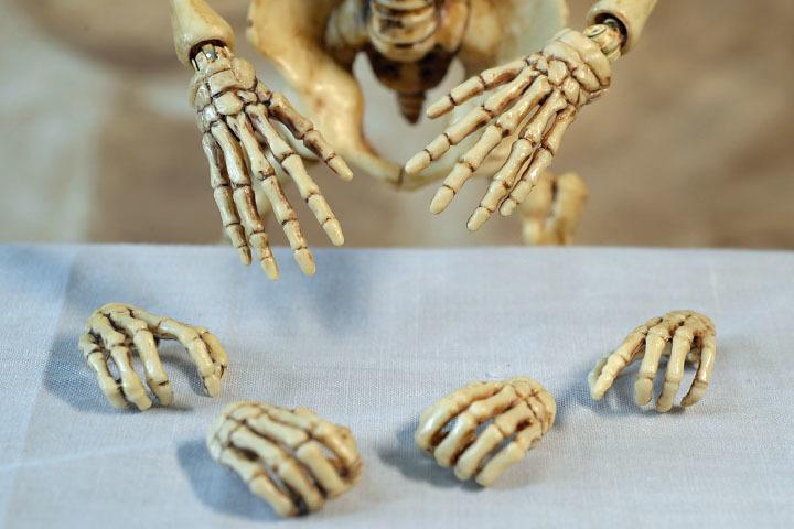 Human Skeleton Body 20 0016