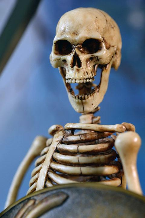 Human Skeleton Body 20 0025